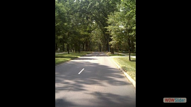 18.tree-lined-streets-myers-park-charlotte-nc