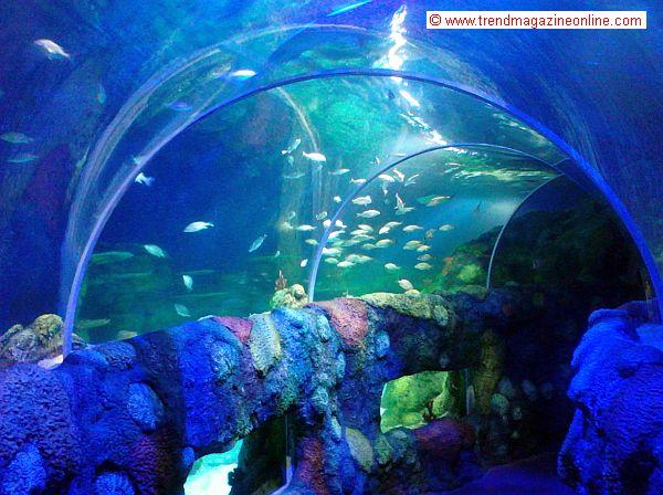 Trend Magazine Online Review July 2014 Sea Life Aquarium